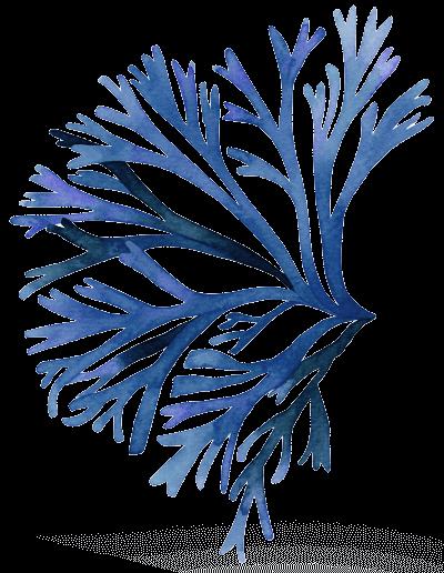 Corail bleu